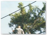 Pruning trees around power lines.